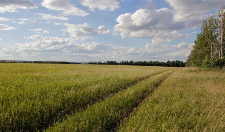 Продам землю сельскохозяйственного назначения в тульской области