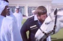 «Трансперенси» потребовало проверить стоимость подаренного Кадырову «бесценного» скакуна