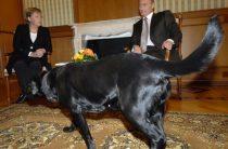 Главред немецкого Focus принес извинения за оскорбление Путина
