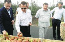 Медведев в Адыгее выслушал претензии фермеров из-за высокого урожая