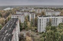 Лес из Чернобыля поедет в Европу