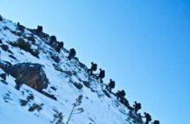 Норвежцам пригрезилась атака России на Шпицберген