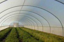 Теплицы промышленные – богатый урожай в любое время года