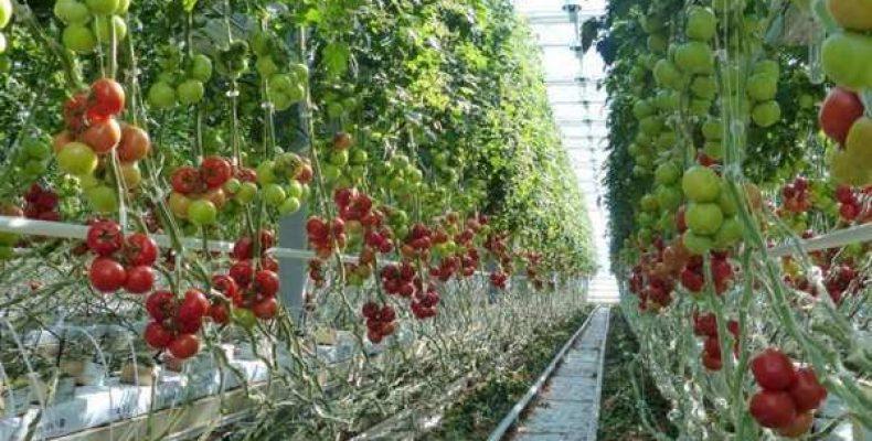 Как сделать огород урожайным?