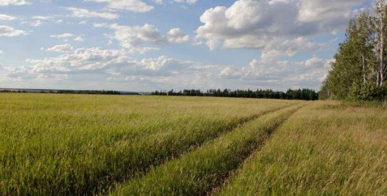 Как купить землю в правильном месте? Нюансы покупки