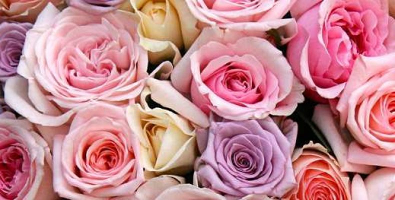 Почему девушки любят розы?