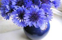 Наша доставка цветов и этапы составления идеальных аранжировок