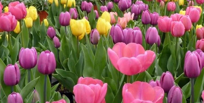 Цветы, которые создают воспоминания