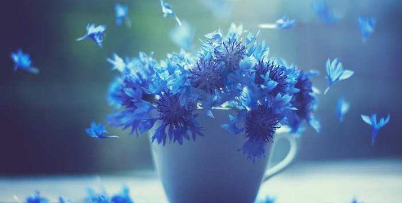 Флористы доставки цветов советуют использовать васильки для свадебного букета